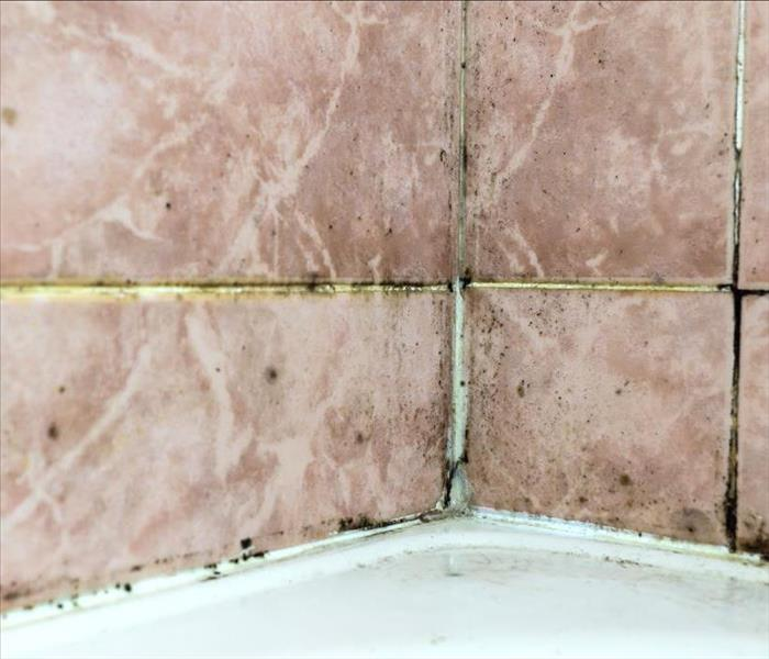 Black mold in shower